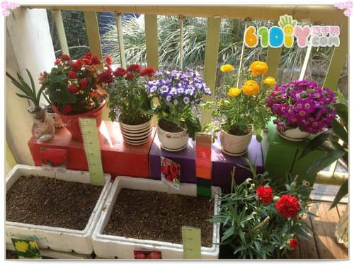 幼儿园春天植物角布置案例
